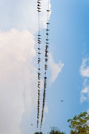 Birds on wire in Chitwan National Park, Nepal photo