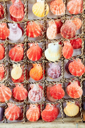 clam beds: collection of various colorful seashells tied  each other by string Stock Photo