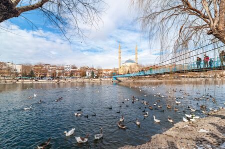 AVANOS, TURKEY - JAN 23, 2019: Goose ducks and swans near by wooden hanging bridge on snowy winter time in Kizilirmak river touristic Avanos town Nevsehir turkey.