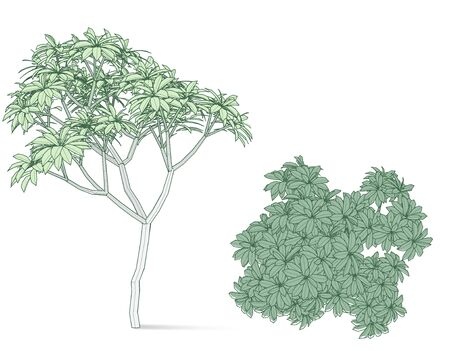 Beautifull tree on a white background for design element
