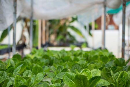 タイのミネラル栄養解決を使用して植物を育てる水耕栽培法