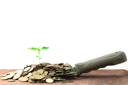 money jar: Plant growing from money jar. Concept of financial investment. Stock Photo