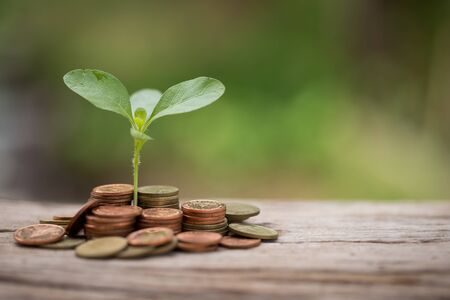 investment concept: Plant growing from money. Concept of financial investment.