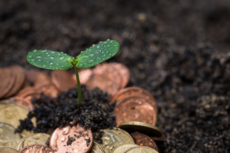 crecimiento planta: Plant growing from money. Concept of financial investment.