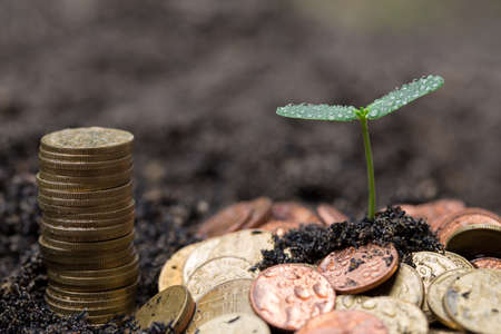 fostering: Plant growing from money. Concept of financial investment.