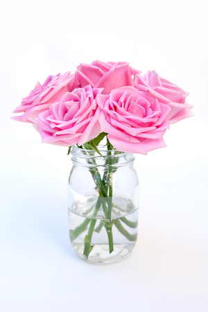 pink rose on white background. Deep focus Stock Photo
