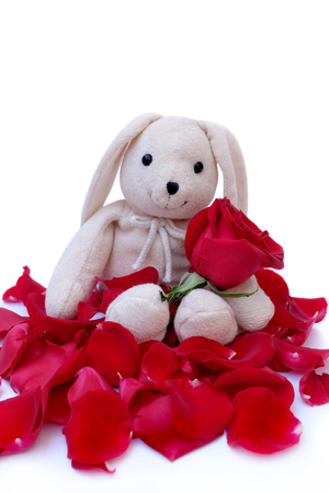 Cute Rabbit doll Hold red roses For a special someone on a specific day.