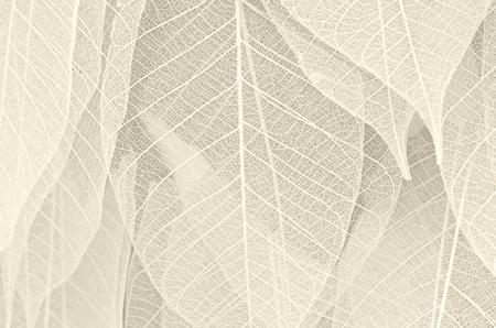 Las hojas secas