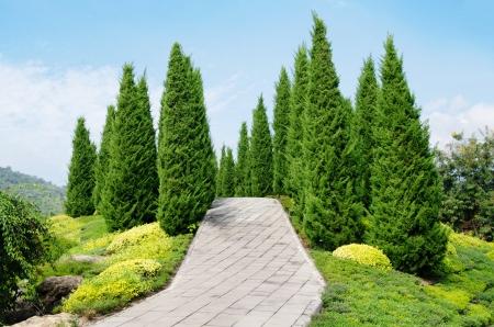 pijnboomtuin-blauwe hemel Stockfoto