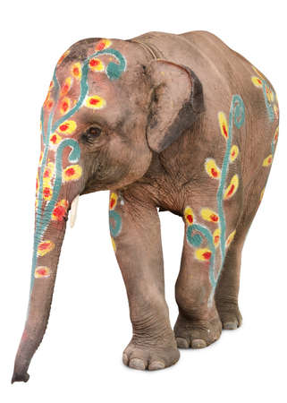 songkran: A painted elephant at the songkran festival in ayuthaya ,thailand
