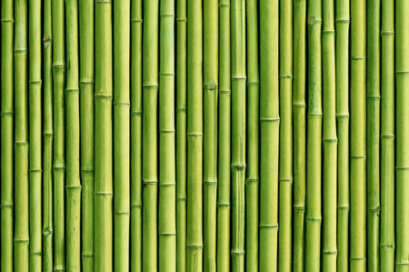 green bamboo fence background 写真素材