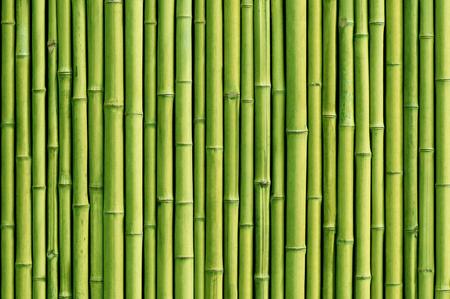Groene bamboe hek achtergrond Stockfoto - 57444929