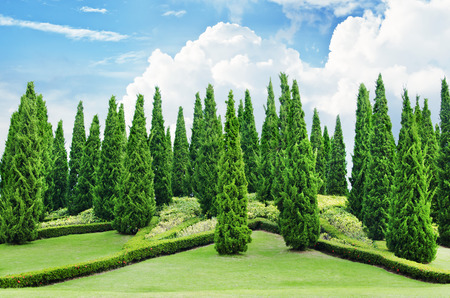 Delicieux Pine Tree Garden With Blue Sky Stock Photo, Picture And Royalty Free Image.  Image 57448496.