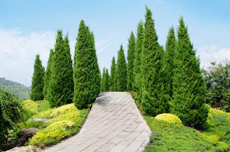 Genial Pine Tree Garden Blue Sky Stock Photo   57448816