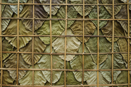 green dry of teak leaves use as background Banque d'images - 101620697
