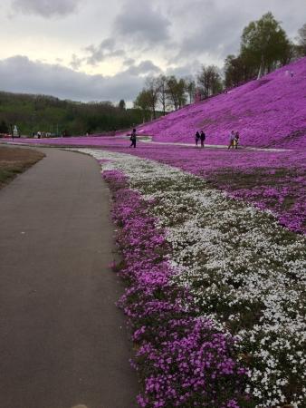 A popular tour spot with amazingly gorgeous sakura in Hokkaido Japan.  Stock fotó