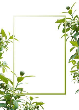 summer frame & banner, summer sale background Imagens