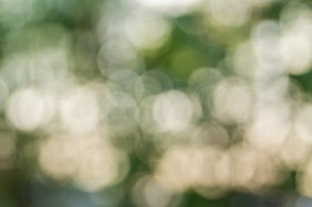 defocus: Green bokeh defocus art abtracts background from trees.