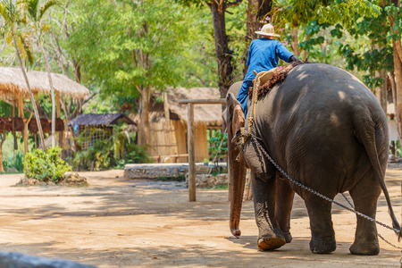 spacial: elephant show at The Thai Elephant Conservation Center, mahout and elephant to show how the lives of the ancients in Chiang Mai, Thailand Stock Photo