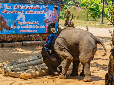 ancients: elephant show at The Thai Elephant Conservation Center, mahout and elephant to show how the lives of the ancients in Chiang Mai, Thailand Editorial
