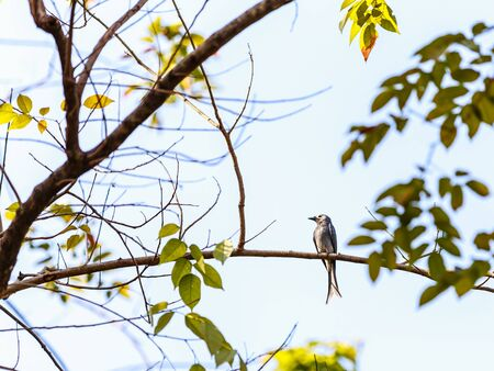 Bird sitting alone on a a branch with a out of focus background in winter 版權商用圖片