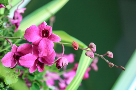 Purple orchid flowers and leaves tree background are out of focus Imagens
