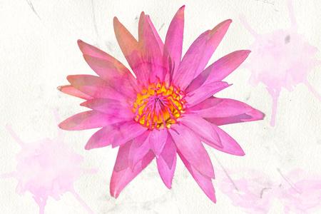 pink lotus: A pink lotus watercolour photo Stock Photo