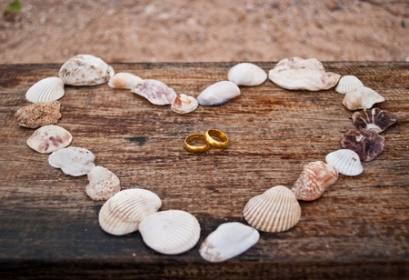 love shell with gold rings. photo