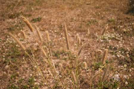 Wayside flower. photo