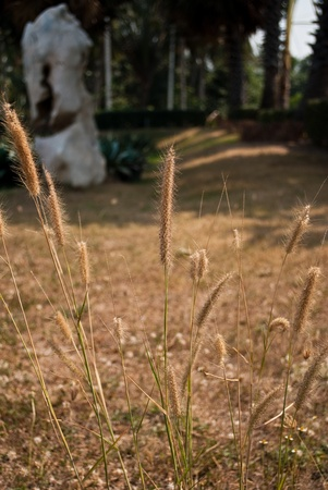 wayside: Wayside flower Stock Photo
