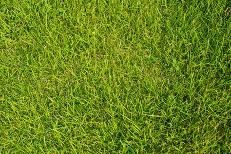 Green grass texture background. photo