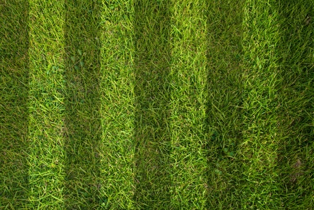 Green grass texture background. photo