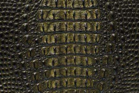 Freshwater crocodile bone skin texture background. Stock Photo - 10309635
