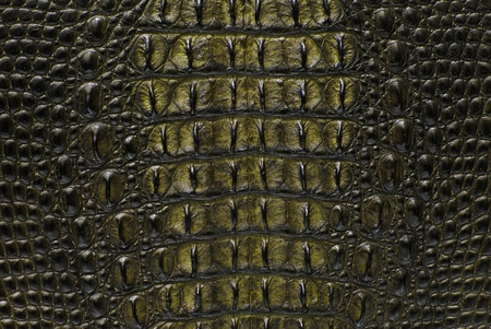 the reptile: Freshwater crocodile bone skin texture background.