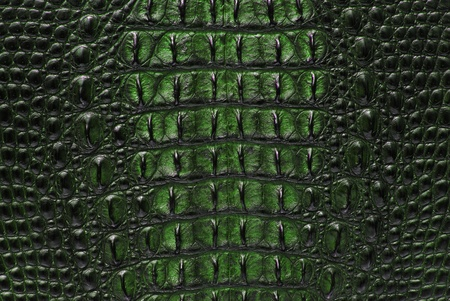 Freshwater crocodile bone skin texture background. photo