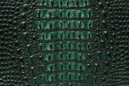 cocodrilo: Cocodrilo de agua dulce hueso piel textura de fondo.