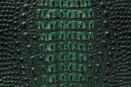animal texture: Freshwater crocodile bone skin texture background.