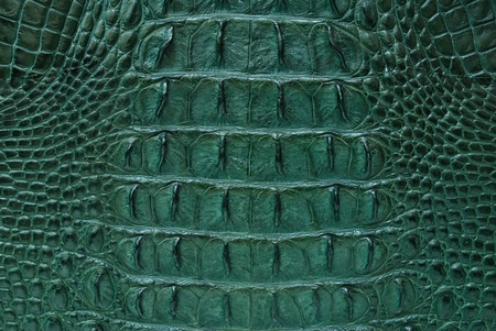 Freshwater crocodile bone skin texture background. Stock Photo - 10449928