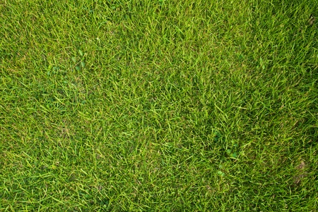 Green grass texture background field. Stock Photo - 10525722