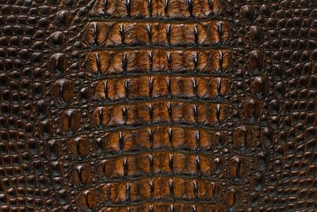 krokodil: S��wasser Krokodil Knochenhaut Textur Hintergrund.