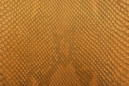 Arrière-plan de texture peau des collations or python.