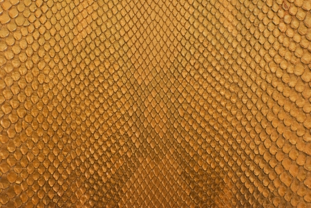 Gold python snack skin texture background. photo