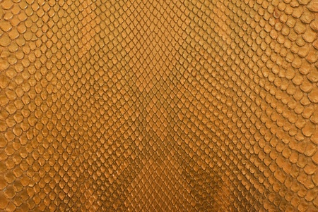 reptile: Gold python snack skin texture background. Stock Photo