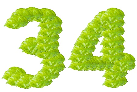 Green leaf number 3 and 4 alphabet character. photo