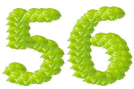 Green leaf number 5 and 6 alphabet character. photo