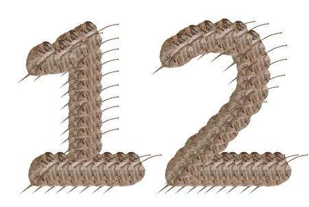 Dried leaf number 1 and 2 alphabet character. photo
