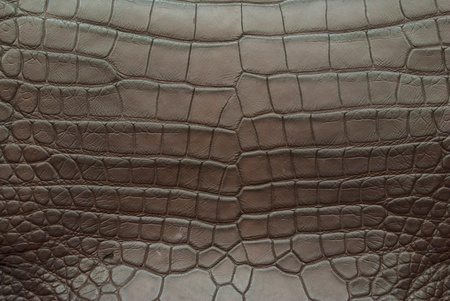 Freshwater crocodile belly skin texture background.