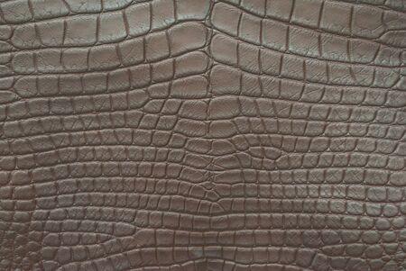 Crocodile belly skin. photo