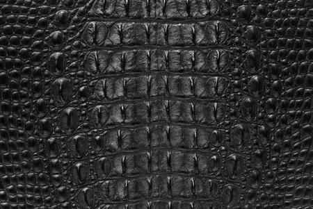 piel morena: Cocodrilo de agua dulce del hueso de piel de textura de fondo.