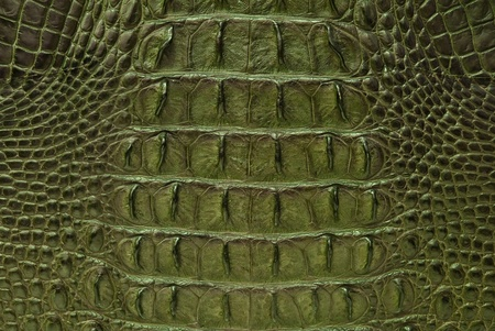 Freshwater crocodile bone skin texture background. photo